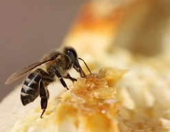 The bees love sweet, like a nectar or a candy from the  sugar and the honey.